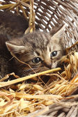 Cats in basket — Stock Photo