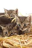 Cats and straw — Stock Photo