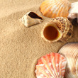 Shells on sand — Stockfoto #10384036