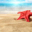 Red starfish — Foto Stock