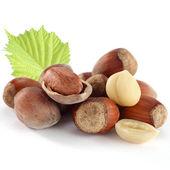 Hazelnuts on white backgroud — Stock Photo