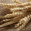 Rye wheat oats — Stock Photo