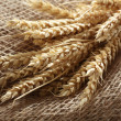 Rye wheat oats — Foto Stock