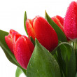 Stock Photo: Red tulips decoration on white