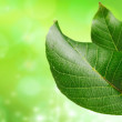 Green leaf — Stock Photo #9705604