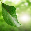 Green leaf and green background — Stockfoto