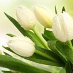 Fresh tulip in water — Stock Photo