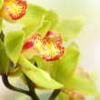 Stock Photo: Few flowers of orchid in sun