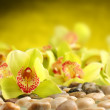 Orchids decorationon stones background — Zdjęcie stockowe #9705874