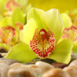 Orchids decorationon stones — Stock Photo