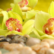 Orchids decoration — Stock Photo