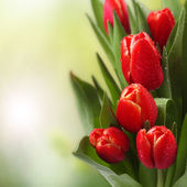 Tulips flowers — Foto Stock