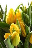 Macro yellow tulips — Stock Photo