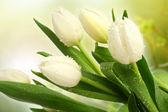 čerstvý tulipán ve vodě — Stock fotografie