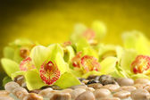 Orchids decorationon stones background — Stock Photo