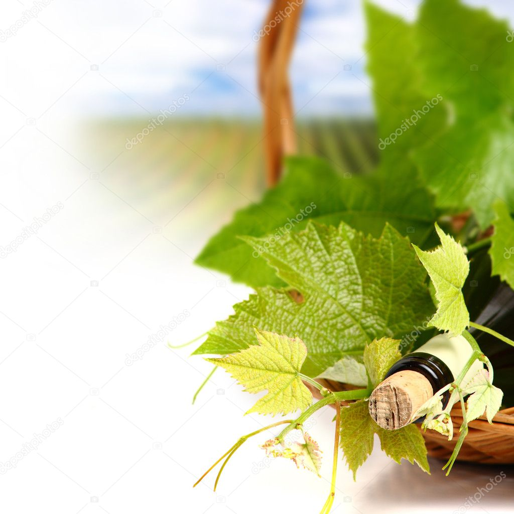 Photo of bottle of wine with green leaves and landscape on background  — Stock Photo #9704792