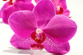 Orchid decoration of pink color — Stock Photo
