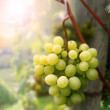 Stock Photo: Landscape with grapes