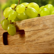 Grapes fruits on wooden table — Stock Photo