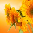Stock Photo: Sunflowers and orange color