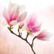 Stock Photo: Magnolidecoration