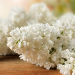 Stock Photo: Smell of elderflower