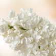 Stock Photo: Elderflower and garden