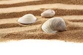 Summer shells — Stock Photo