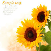 Slunečnice na pozadí slunce — Stock fotografie