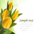 Tulips — Stock Photo #9975075
