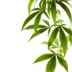 Cannabis Border — Stock Photo #10676604
