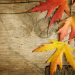 Autumn Leaves over wood background. With copy space — Foto de Stock