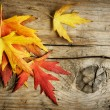 Foto Stock: Autumn Leaves over wooden background. With copy space