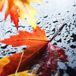 Autumn — Stockfoto #10676974