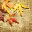 Autumn Leaves over Burlap background — Stock Photo