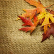 Foto Stock: Autumn Leaves over Burlap background