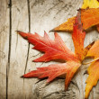 Autumn Leaves over wooden background. With copy space — Stock Photo #10677047