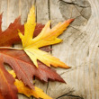 Autumn Leaves over wooden background. With copy space — Stock Photo #10677068