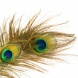 Peacock Feathers over white — Stock Photo #10677080