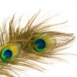Peacock Feathers over white — Stock Photo