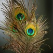 Stock Photo: Peacock Feathers over black