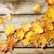 Autumn Leaves over wooden background. With copy space — Stock Photo