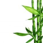 Bamboo isolated on white — Stock Photo
