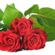 Red Roses Bunch — Stock Photo #10677791