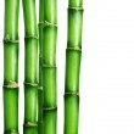 bamboe grens — Stockfoto