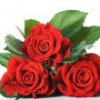 Beautiful Red Roses Over White — Stock Photo #10677815