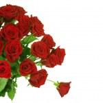 Red Roses border over white — Stock Photo
