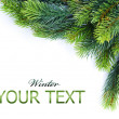 Christmas tree branches border over white — Stock Photo
