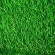 Fresh Green Grass Background - Stock Photo