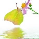 Beautiful Butterfly on Flower — Stock Photo